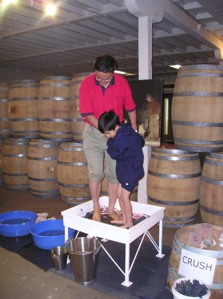 Stomping cabernet at Wynn's during 2004 harvest