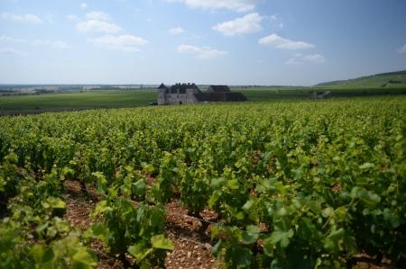 Vines of Musigny overlooking chateau du Clos du Vougeot