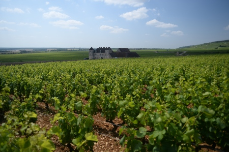 Vines of Musigny overlooking chateau du Clos du Vougeot